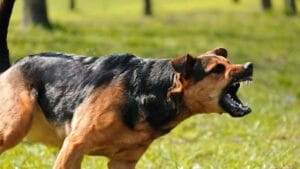 dog bite attorney injury